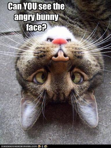 Bunny Face